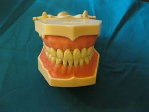 Picture of FRASACO JAW SET WITH TEETH AG3