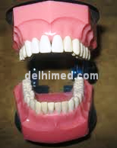 Picture of Buy Online Dental Shop India (Jaw Set)