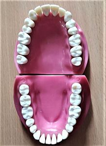 Picture of API Jaw Set with Teeth N200